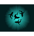 silhouettes of sharks vector image