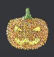 pumphin vector image