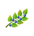 Blueberry-Branch-380x400 vector image vector image