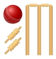 Cricket ball and stump vector image