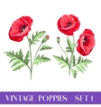 Set of poppy flowers elements vector image vector image