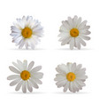 colorful naturalistic beautiful 3d chamomile set vector image