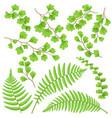 green fern leaves set vector image