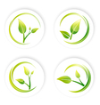 Green Sprout Leaf vector image