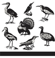 Vintage birds  set vector image