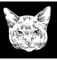 cat head vector image