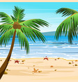 beach with palms sand vector image