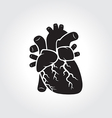 Heart anatomy symbol vector image