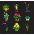 houseplants indoor and office vector image