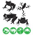 Frog vector image