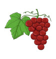 grapes colored hand drawn sketch vector image
