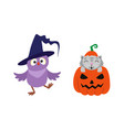 flat cat sitting at pumpkin owl in hat vector image