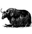 yak bos grunniens vector image