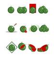 twelve variants of watermelon vector image