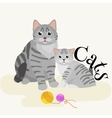 Pets mother cat and kitten sitting white vector image