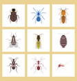assembly flat insect wasp soldier vector image