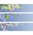 Set of blossoming branches vector image