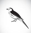 Bird magpie vector image