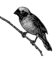 Scratchboard bird vector image