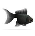 aquarium fish 05 vector image vector image