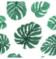 tropical exotic monstera leaves seamless pattern vector image