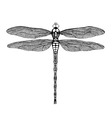 black dragonfly vector image