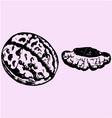 cracked walnut vector image