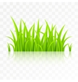 Grass isolated on transparent background vector image vector image