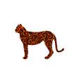 cheetah wildcat color silhouette animal vector image