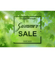summer fresh green leaves with sun rays vector image