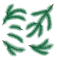 set of fir branch vector image