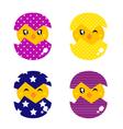 Spring chicken in eggs vector image