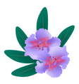 Purple Rhododendron with Green Leaves on White vector image