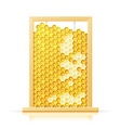 bee honeycomb in frame vector image