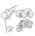 Hand drawn orchid vector image