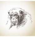 Sketch of chimpanzee head vector image