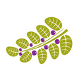 Simple green deciduous tree leaf with purple seeds vector image vector image