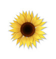paper art sunflower vector image