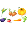 Healthy vegetables and spices vector image vector image