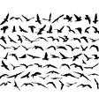 bird seakull vector image
