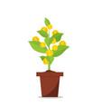 money tree in flower pot vector image