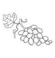 hand drawn sketch fruit - grape eco food vector image