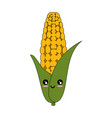 isolated corn vegetable vector image