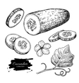 Cucumber hand drawn set Isolated cucumber vector image