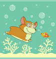 cartoon welsh corgi dog diving in the ocean vector image