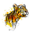 Colored hand sketch of a young tiger vector image