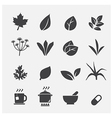 herb icon vector image