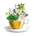 herbal tea in a transparent cup vector image