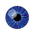 iris eye vector image