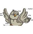 Cartoon bird vector image vector image
